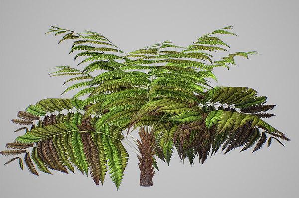 3D alsophila fern average