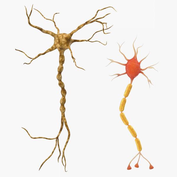 neuron nerve cell 3D model