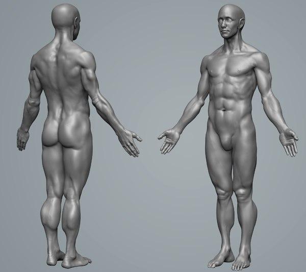 anatomy male 3D