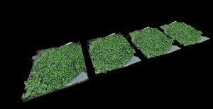 3D plants 14 - groundcover