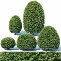 taxus baccata topiary 3D