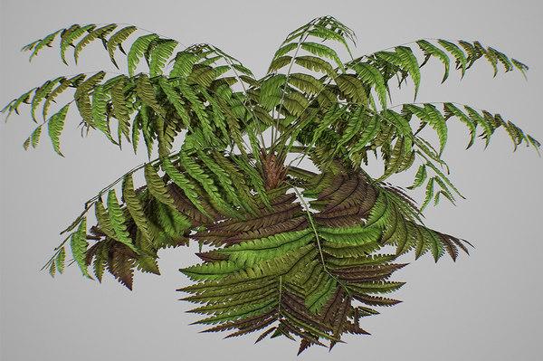 alsophila fern old 3D model