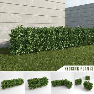 hedge iii max
