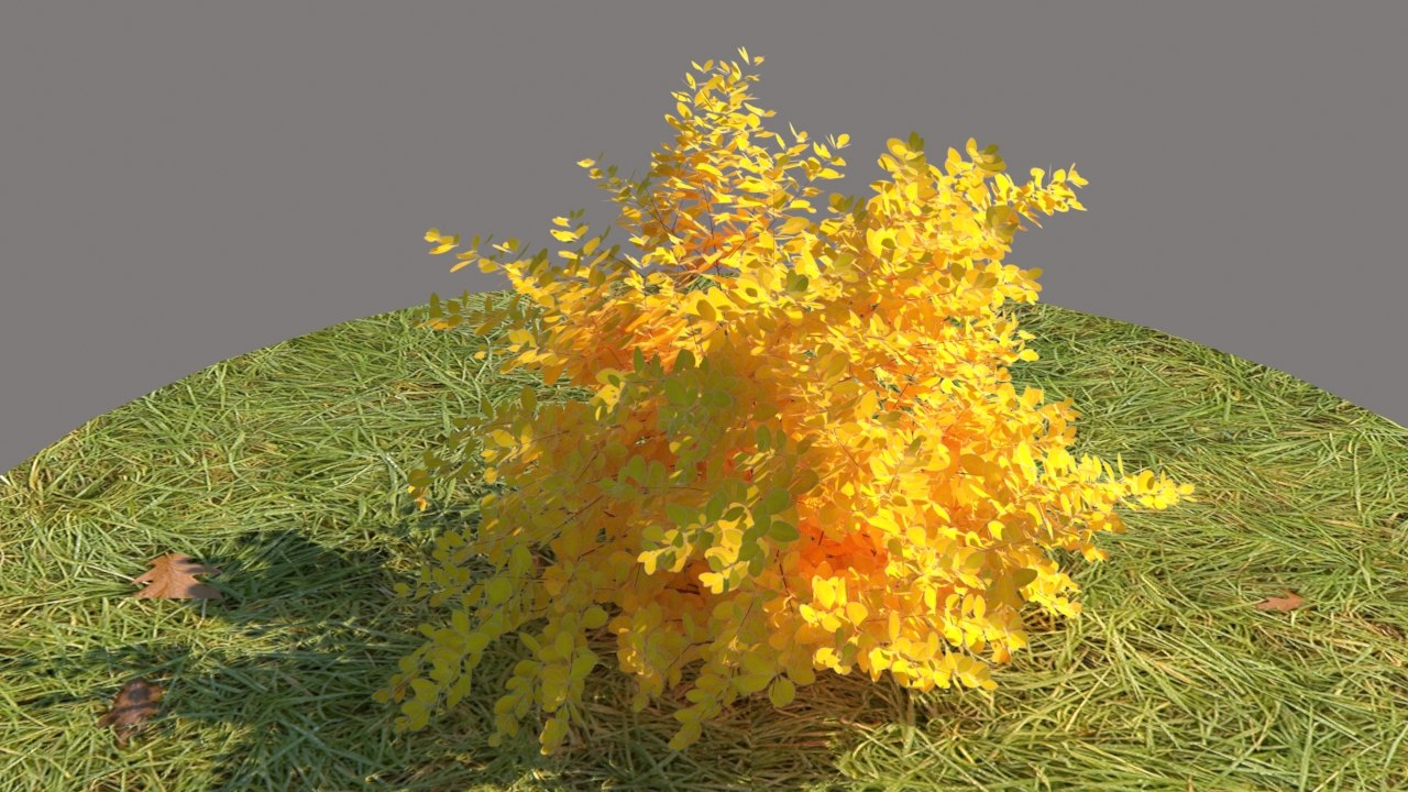 3D berberis thunbergii aurea model