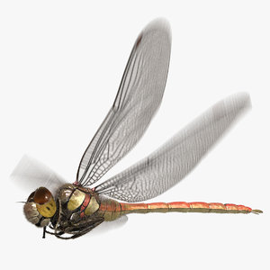 3D dragonfly common darter animation flying
