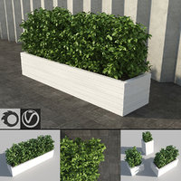 shrub rectangular planter 3d model