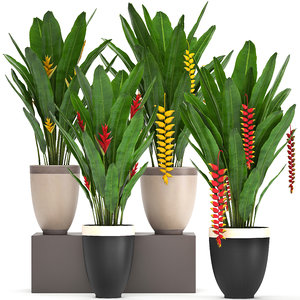 exotic plants heliconia 3D