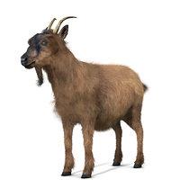goat animal 3D model