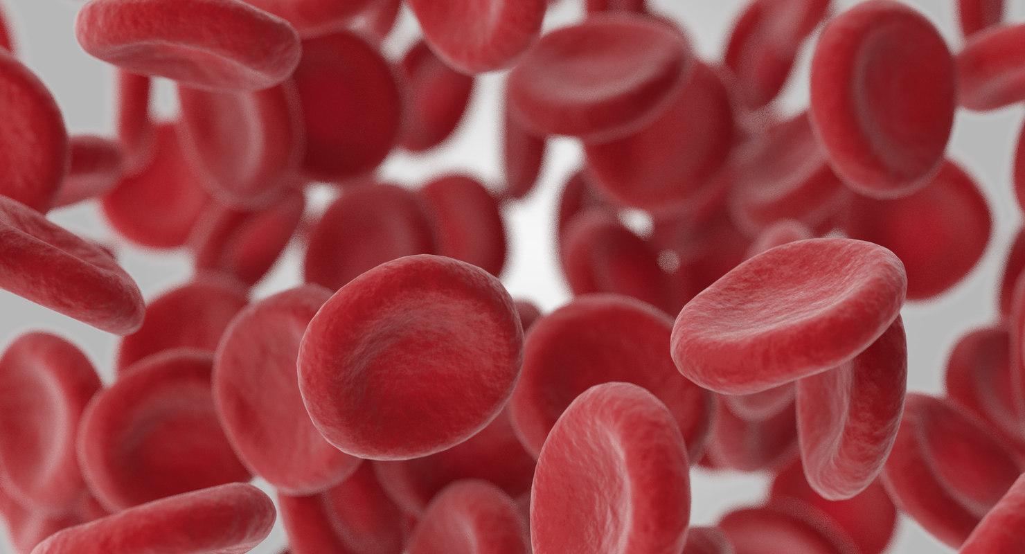 3D blood vessels model