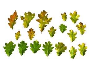 autumn leaves scan pack 3D model