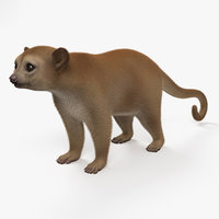 3D kinkajou mammal animal