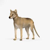 thylacine 3D model
