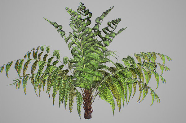 3D alsophila fern young model