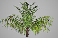 3D alsophila fern young model