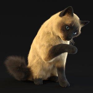 3D cat siamese
