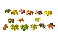 3D autumn leaves scan pack model