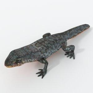 alpine newt model