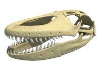 3D komodo dragon skull skeleton model