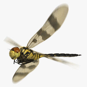 dragonfly halloween pennant animation flying 3D model