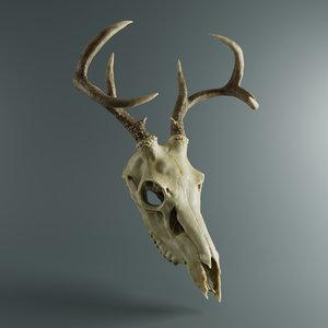 3D deer skull