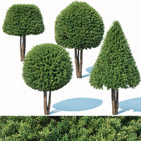 3D taxus baccata topiary model