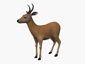 antelope reed buck 3D model