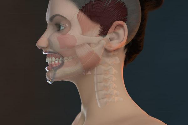 3D model orthodontic mannequin v-ray ortho