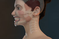 Orthodontic Mannequin (V-Ray)