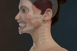 3D model orthodontic mannequin v-ray ortho