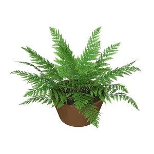3D fern alpha channel model