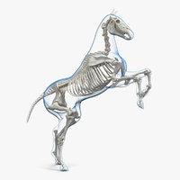 3D rearing horse envelope skeleton model
