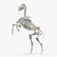 rearing horse skeleton 3D model
