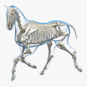 running horse pose envelope 3D model
