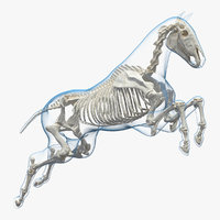 3D model jumping horse envelope skeleton