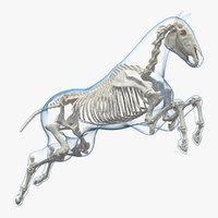 Jumping Horse Envelope with Skeleton 3D Model