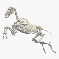 jumping horse skeleton 3D model