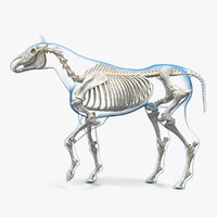 horse envelope skeleton rigged 3D model