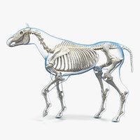 horse envelope skeleton rigged 3D model