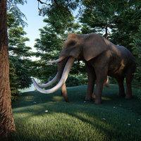 elephant four tusks