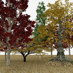 3D model autumn cherry aspen