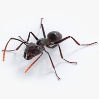 Realistic Black Ant