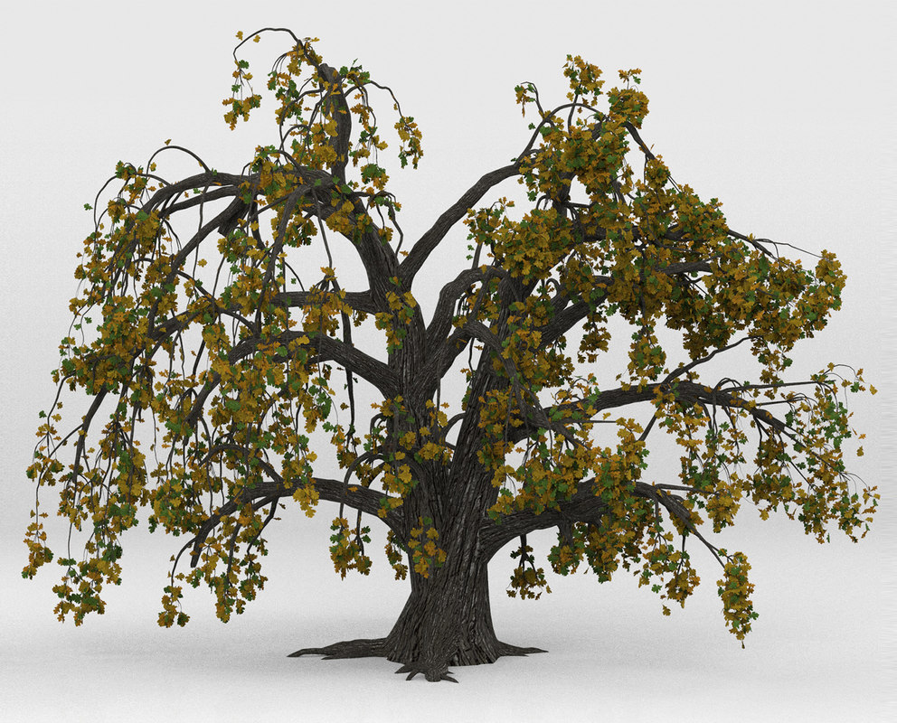 tree oak old autumn 3D model