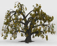 Old oak autumn 3D model
