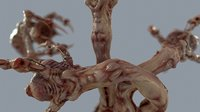 3D model venous clawed worm