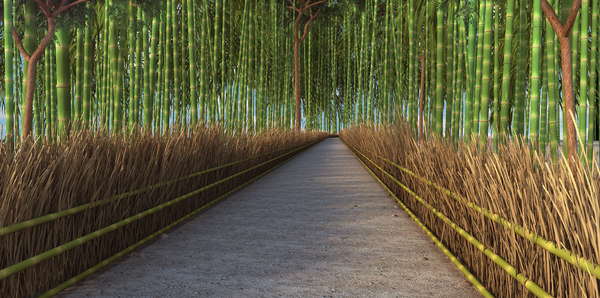 3D bamboo forest natural japan model