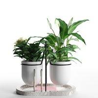 3D model peace lily camellia