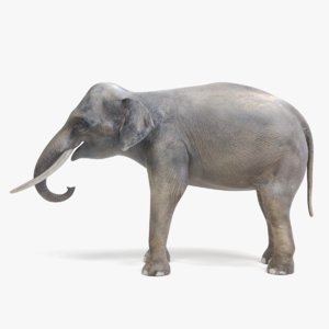 3D asian elephant male model