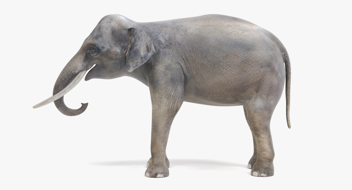 3D asian elephant male model