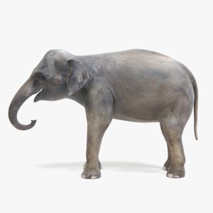 asian elephant female 3D model