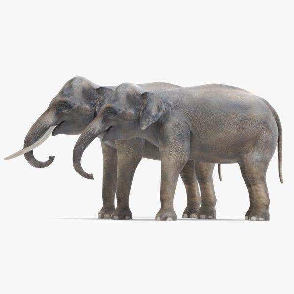 3D model asian elephants